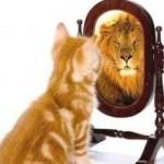 confidence-cat-250x236